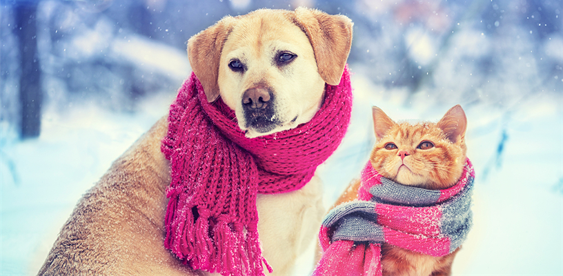 Keep Your Pets Warm and Safe This Winter