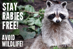 Stay Rabies Free.  Avoid Wildlife.